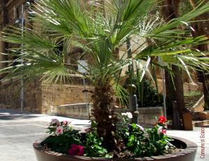 fiori  centro storico 2
