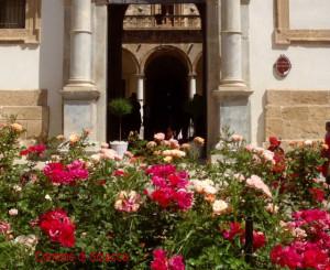 palazzo municipale di sciacca con rose