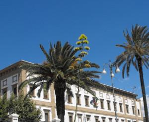 palazzo municipale con palme