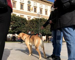 cane in piazza scandaliato